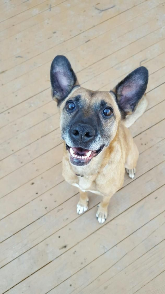 Adopt Zita On 2017 Ohio No Kill Rescues And Shelters German