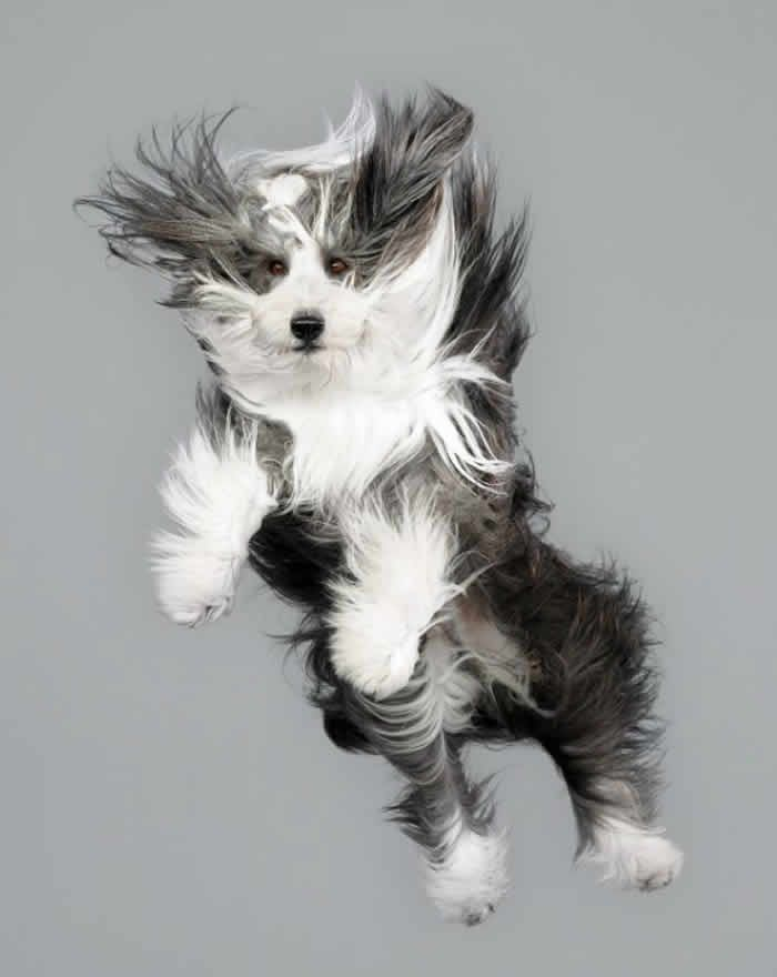 Perros al Aire