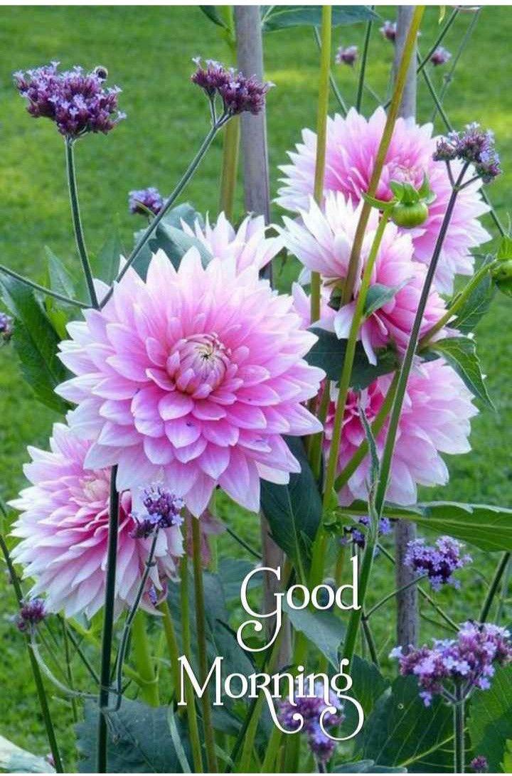Flower Garden By Marlene Roos On Good Morning Today Good Morning Gif Flowers