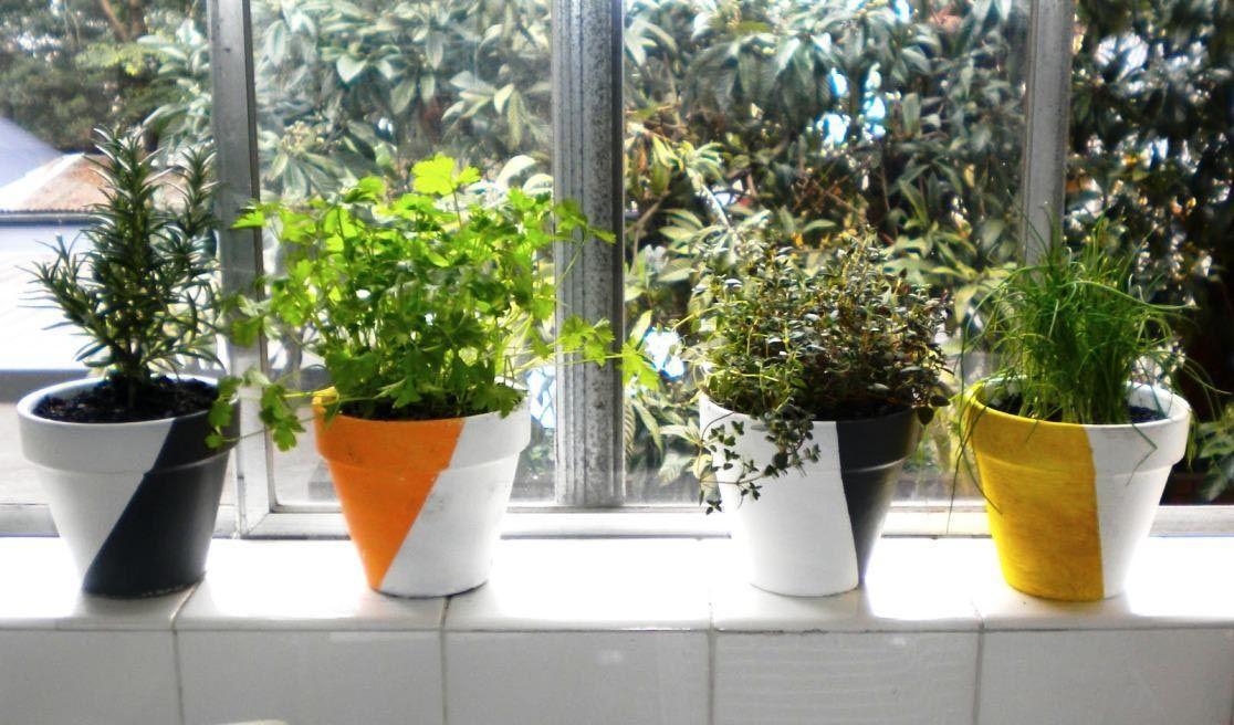 indoor windowsill herb garden indoor vegetable gardening on indoor herb garden diy wall kitchens id=42805