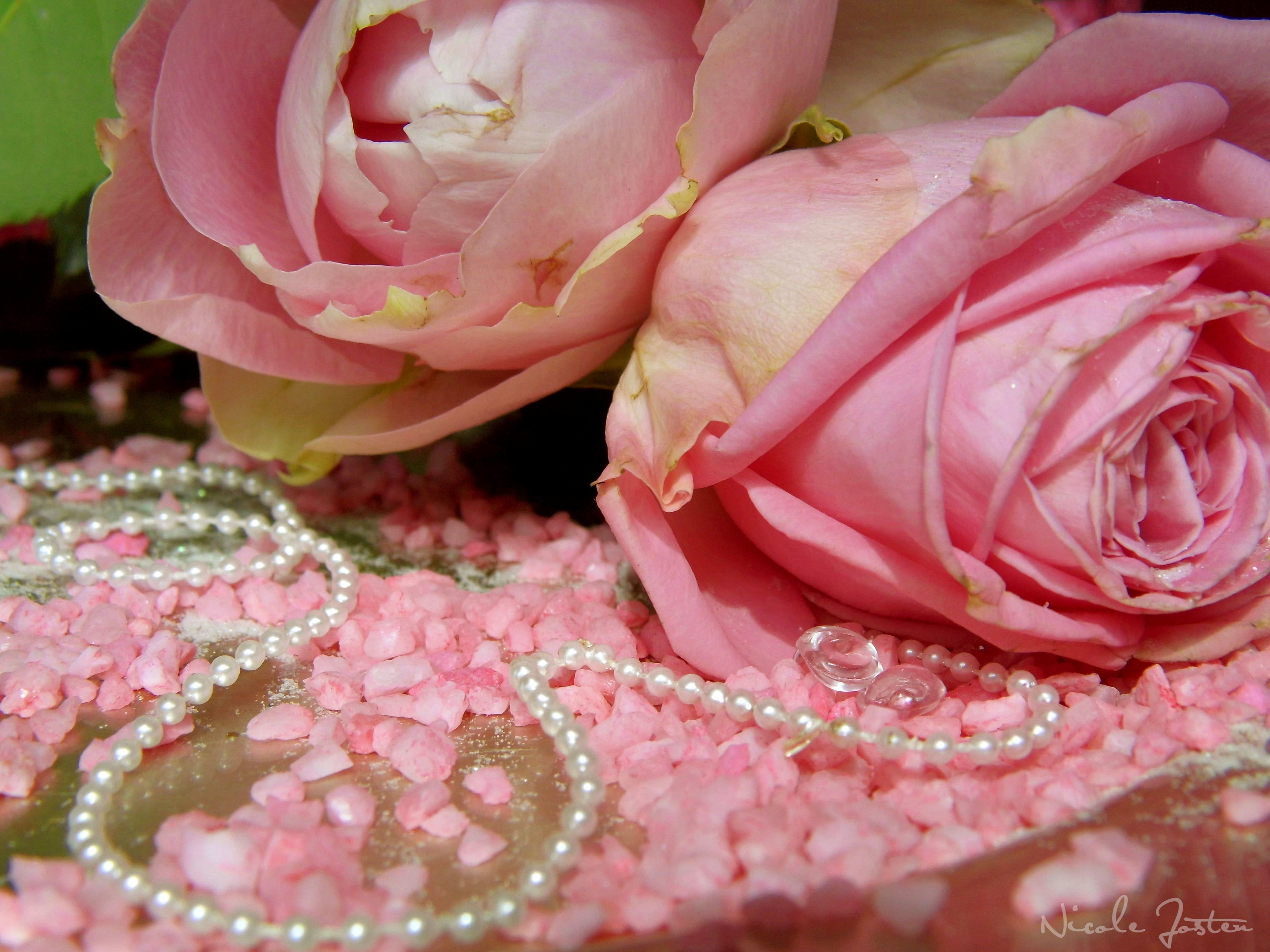 Pearls And Flower Wallpaper Backgrounds Roses Pearl Pink