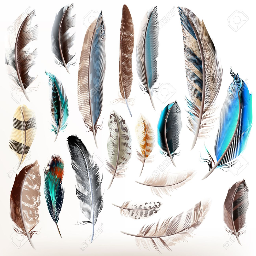 Big Set Or Collection Of Detailed Bird Feathers In Realistic Watercolor Feather Feather Art Glowing Art