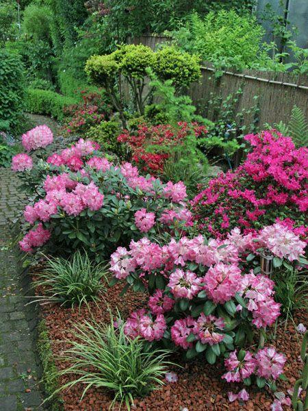 Stauden für den Rhododendron-Garten Stauden, Bepflanzung und Gärten - baume fur den vorgarten