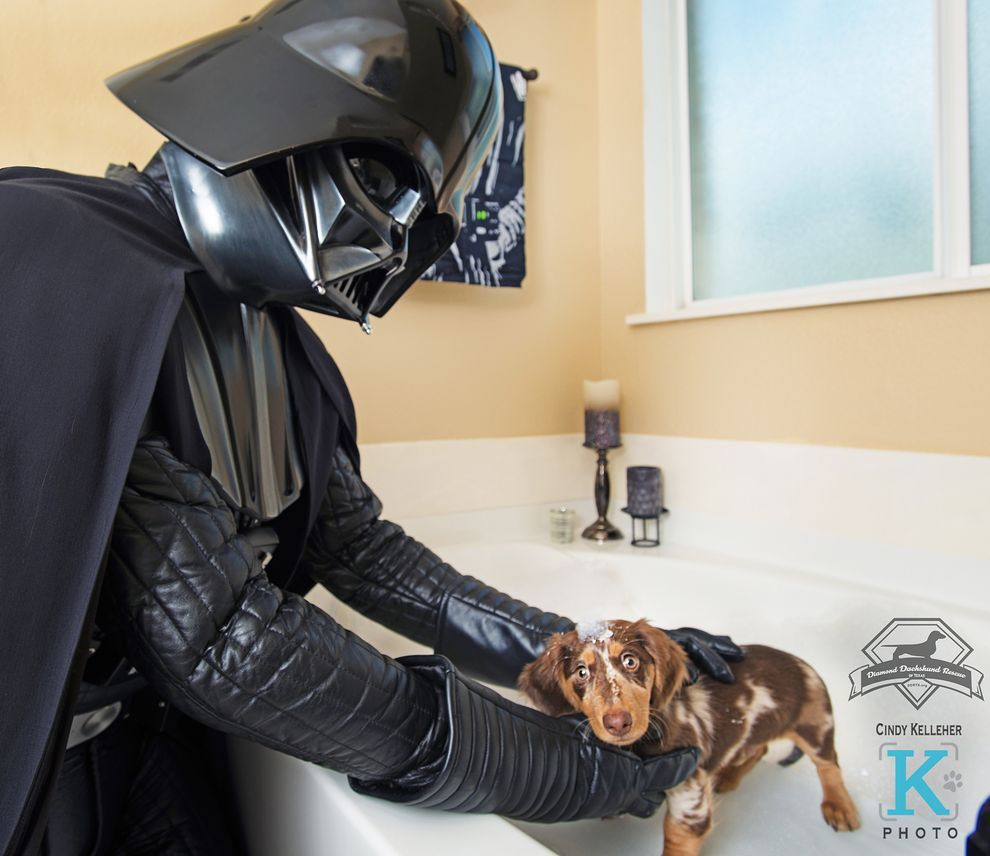 Star Wars Fans Mastermind A New Hope For Rescued Dachshunds Dachshund Rescue Dachshund Star Wars Fans