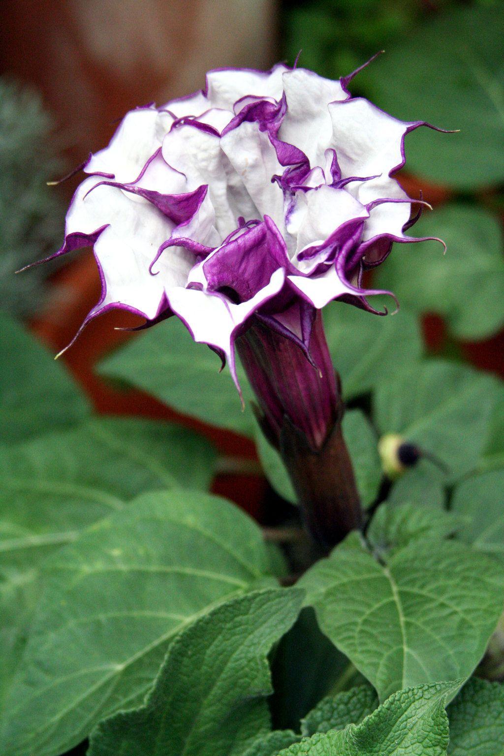 Beautiful but deadly flowersnot all flowers are named bloogers beautiful but deadly flowersnot all flowers are named bloogers get your groove on flores pinterest flores izmirmasajfo