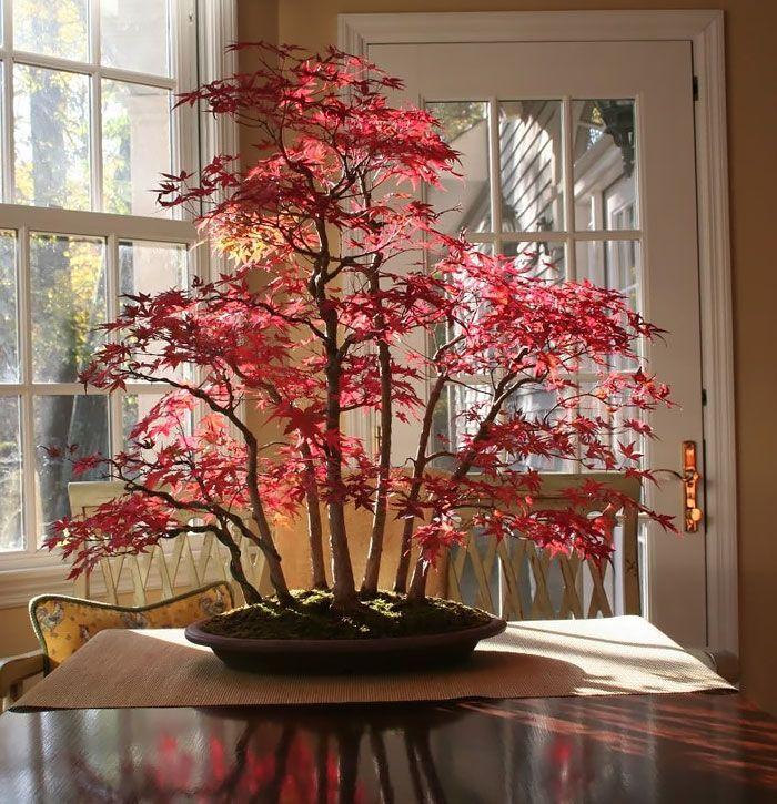 Неперевершена краса бонсай (фото)   Квіти, Краса, Ідеї