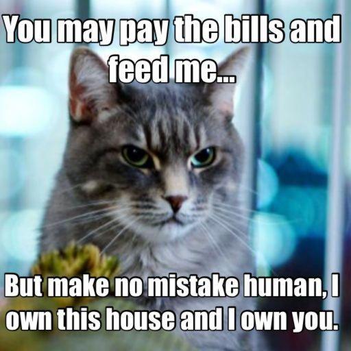 Pin Oleh Shaina Lee Di Cats Humor Kucing Meme Kucing Gambar Hewan Lucu