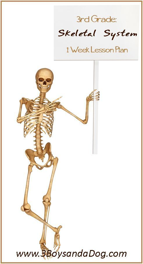 Learn The Skeletal System Grade Three Unit Study Kid Blogger