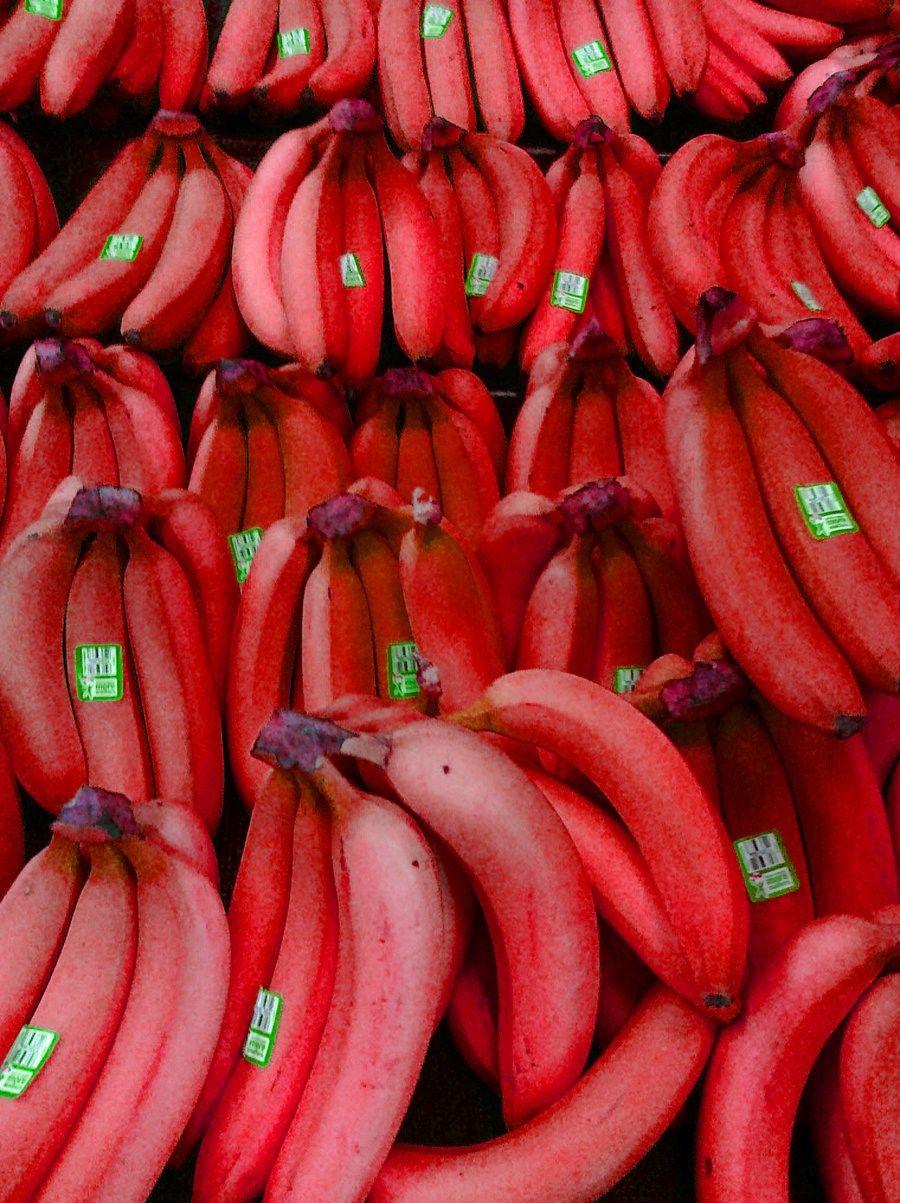 """Chuối đỏ Dacca đang tạo nên 1 cơn """"sốt"""" trên thị trường vài năm trở lại đây. Rất nhiều người lầm tưởng đây là dòng chuối cảnh nhưng khi được biết loại chuối này có thể cao vài ba mét, trồng chủ yếu để lấy quả, cây trồng mới, lạ, quả ăn thơm ngon và rất tốt cho sức khỏe thì cơn """"sốt"""" này ngày càng gia tăng. Nay shop đã có Cây Giống Cây Chuối Đỏ  để phục vụ nhu cầu thị trường, các bạn hãy nhanh tay hốt ngay về nhé."""