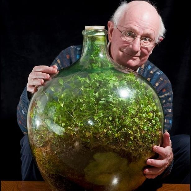 Amazing ecosystem in a jar! Kind of demonstrates how the Earth works!