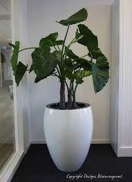 Potten Voor Planten.Mooie Plant In Grote Pot Deco Binnen In 2019