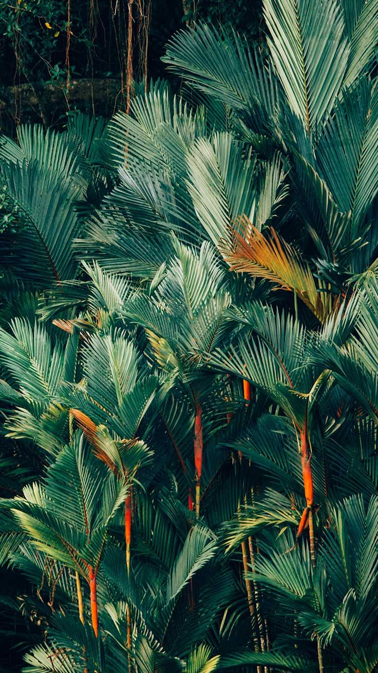 To The Jungle iPhone Xs Max Wallpapers Tree