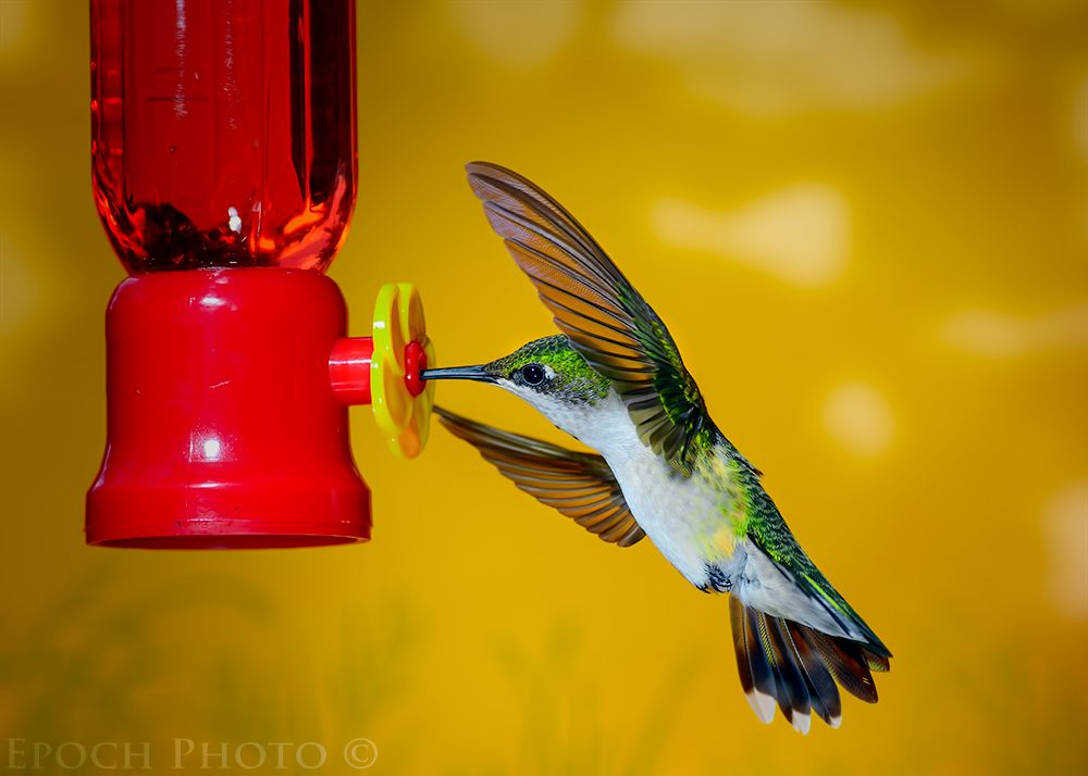 hummingbird inspirational quotes - Google Search
