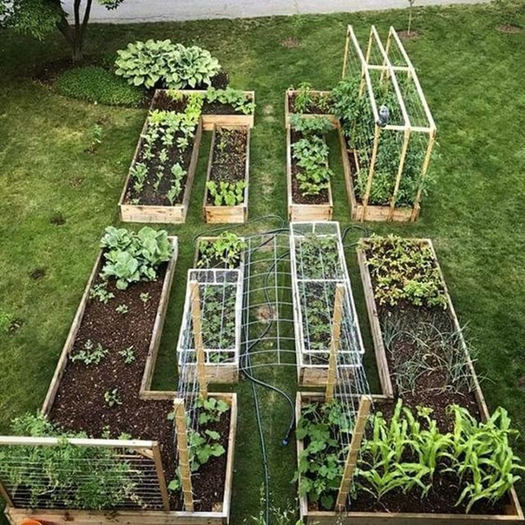 30 Inspiring Veggies Garden Layout For Your Outdoor Ideas #veggiegardens