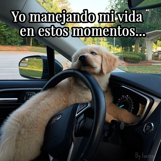 Meme Perrito Manejando Vida Perro Manejando Memes Perros Perrito