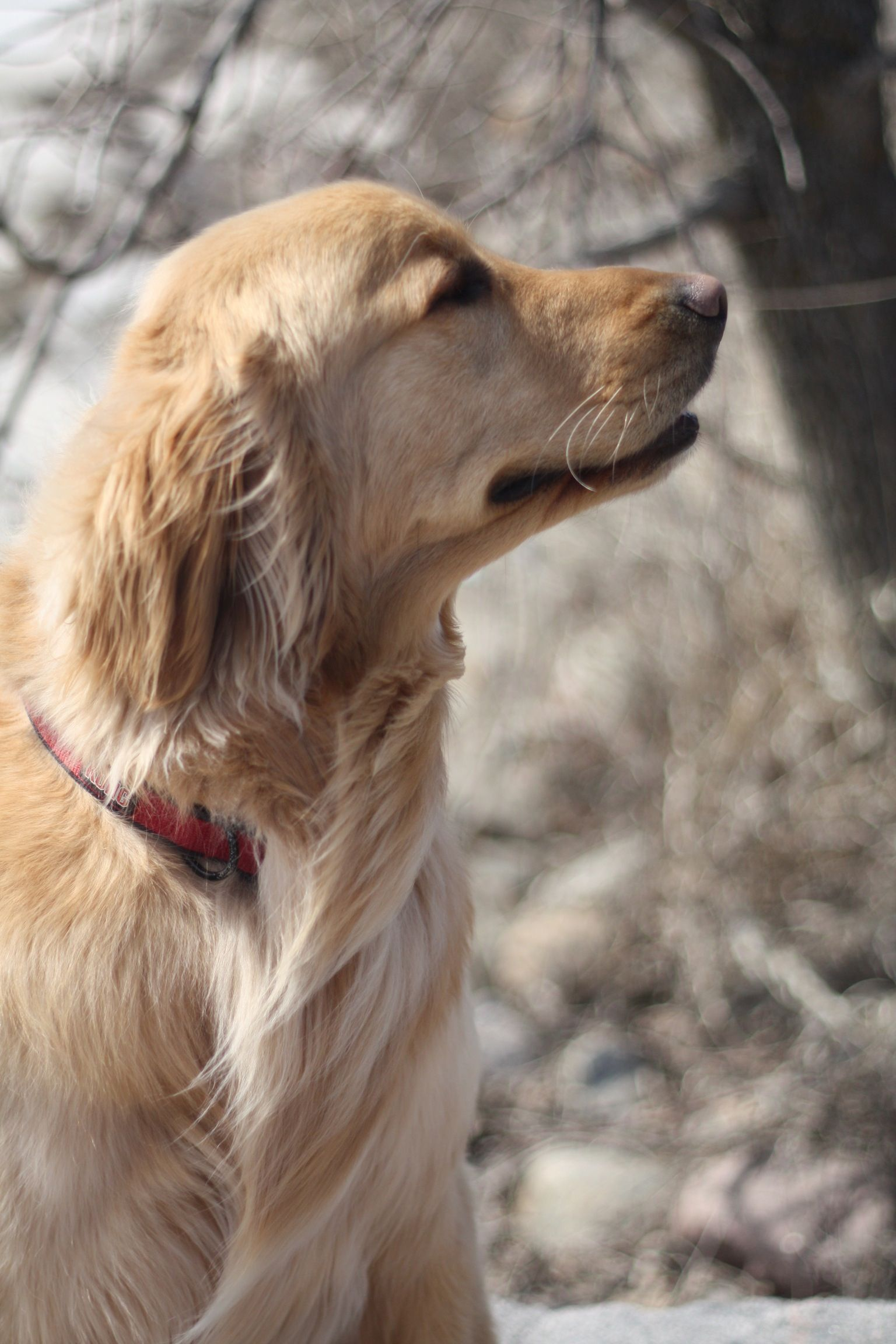 Is Spring In The Air Group Golden Retrievers Best Dog Breed Ever Dogs Golden Retriever Dog Quotes Goofy Dog