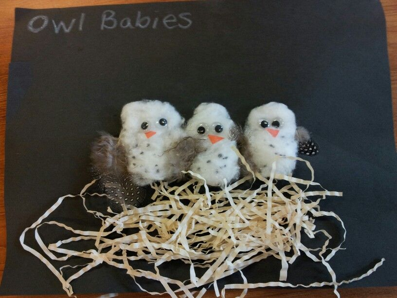 Owl Babies Craft Using Cotton Balls And Feathers Crafts Fall