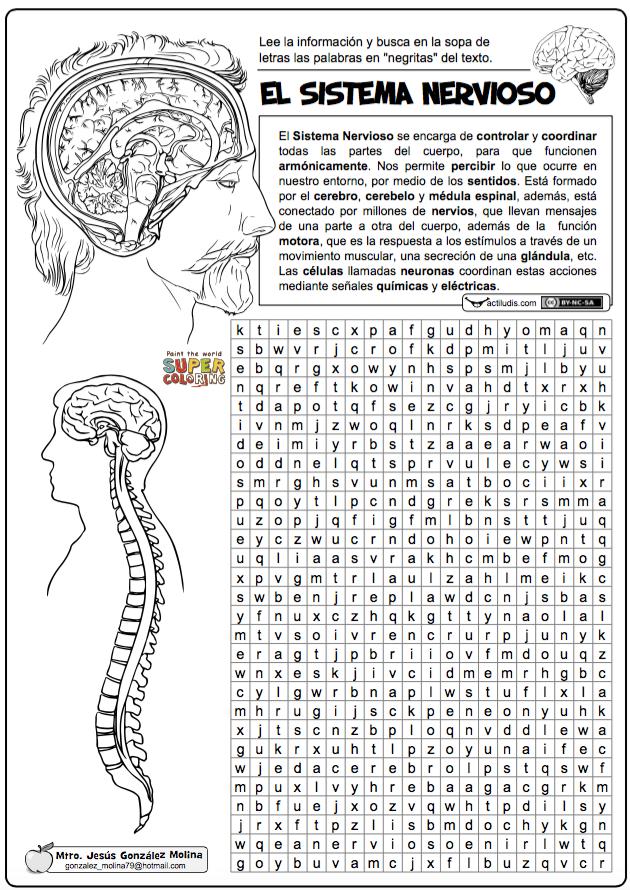 Sistema nervioso … | EL CEREBRO: LA MEMORIA............ | Pinte…
