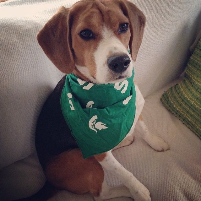 Winston Is All Decked Out For Tonight S Big Michiganstate Vs