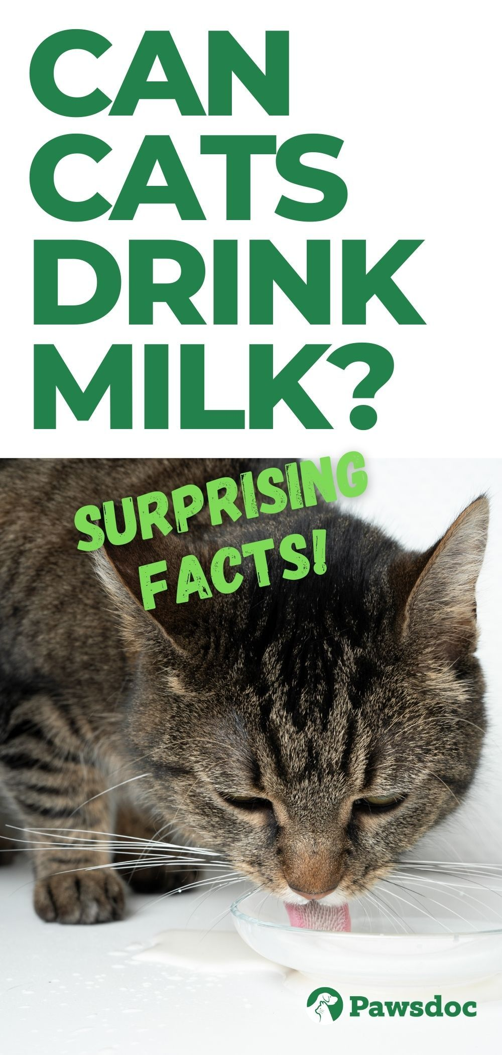 Can Cats Drink Milk Check What It Will Do To Your Cat Cat Drinking Cat Health Drink Milk