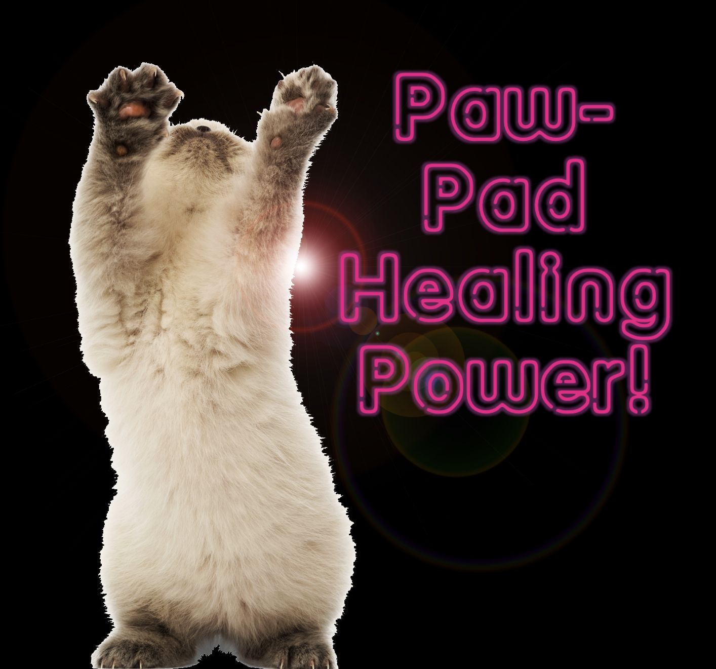 What To Do For Dry Pads On A Cat S Feet Cuteness Com Dry Paws Cracked Paw Pads Cat Pad