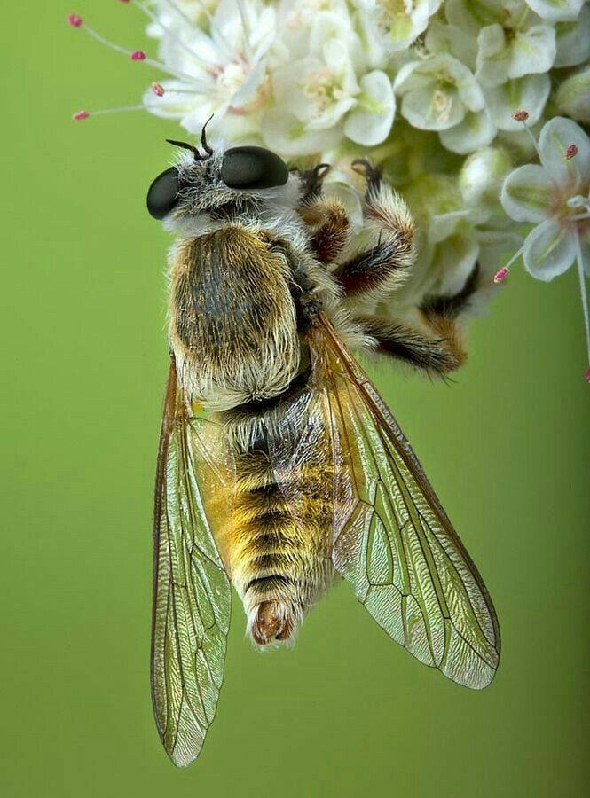 pin von jodee barros moore auf bees pinterest insekten bienen und tiere. Black Bedroom Furniture Sets. Home Design Ideas