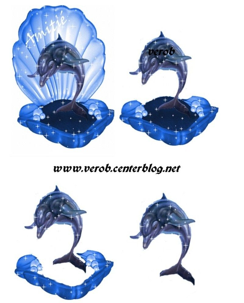 D animaux page sealife pinterest animaux d cards and