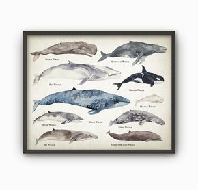 Whales Watercolor Wall Art Poster Educational Whale Species Size
