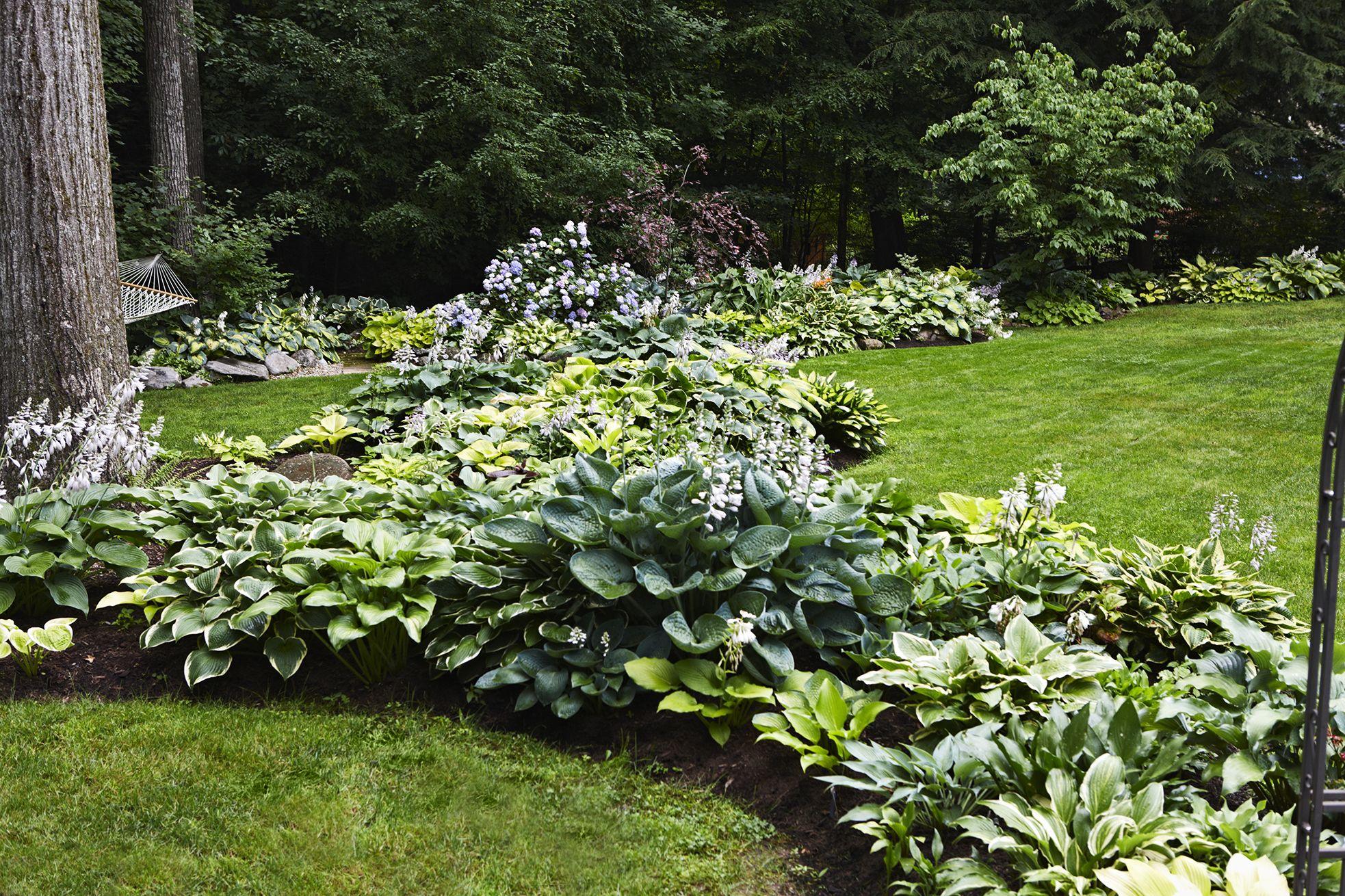 Grow A Lush Shade Garden With Hostas Lawn Ideas Shade Garden