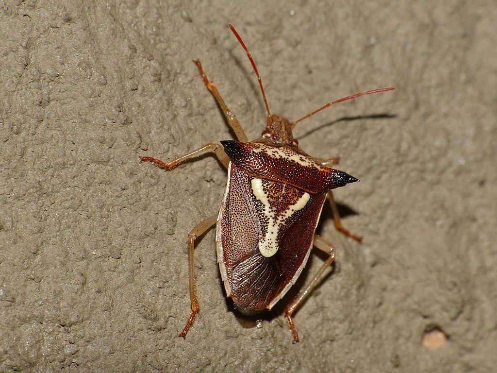 Cockroaches And Grass Bugs 4 Customer Service Mistakes