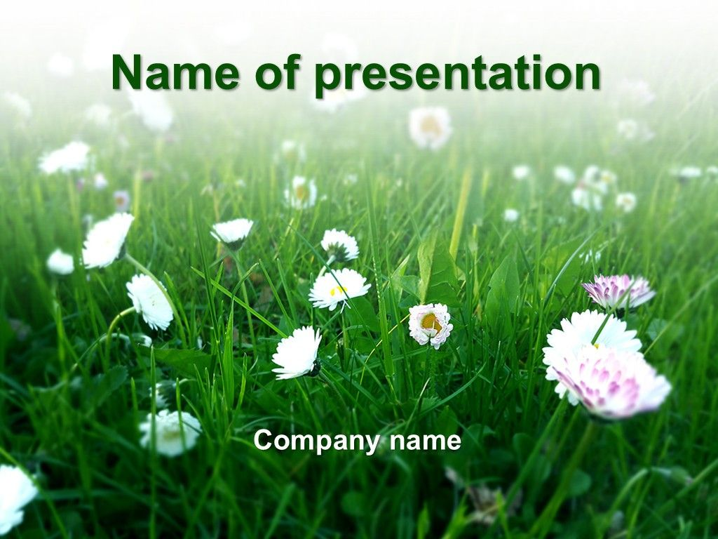 Summer White Flowers Powerpoint Template