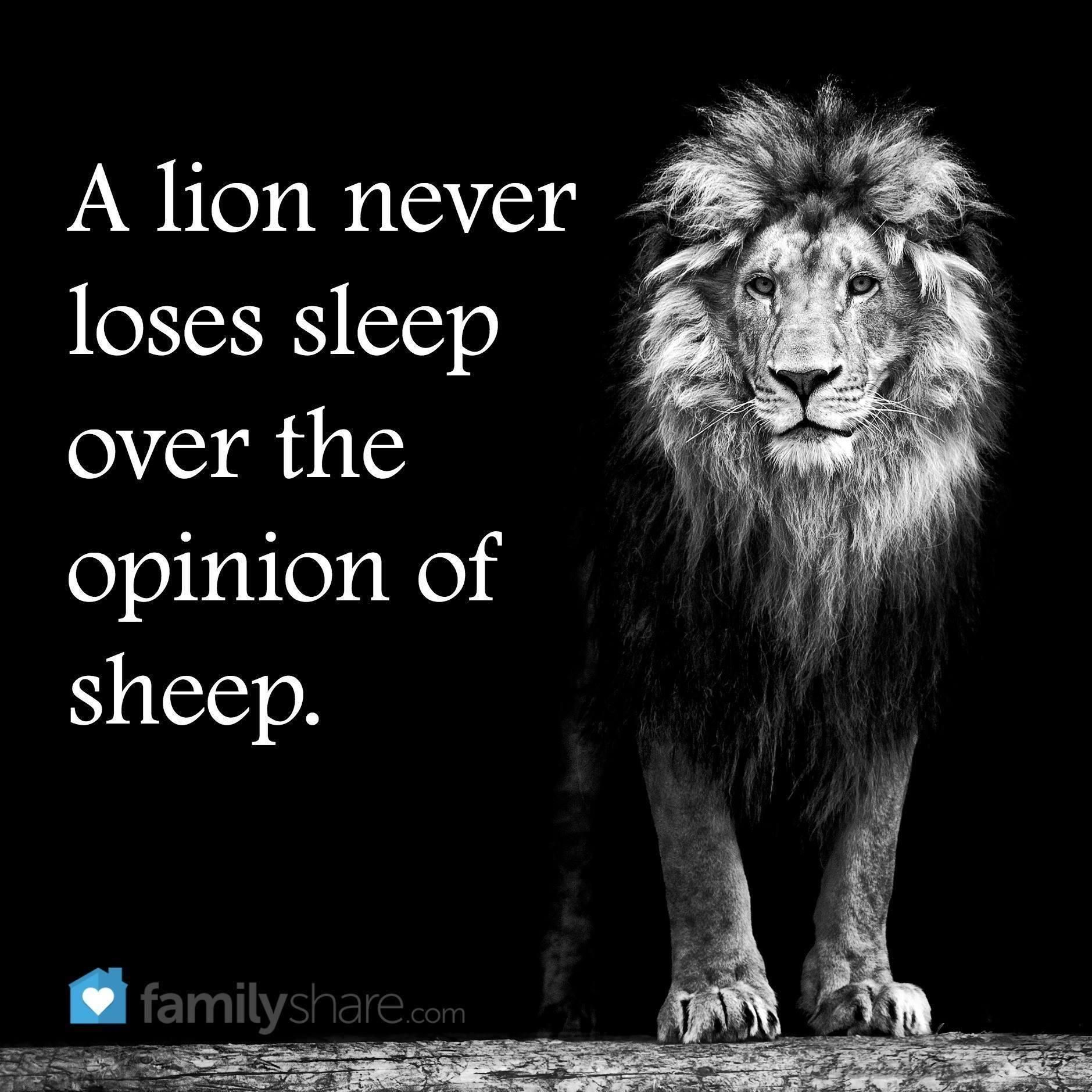 A Lion Never Loses Sleep Over The Opinions Of Sheep With Images