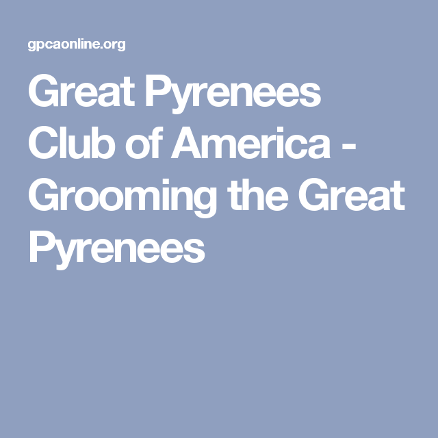 Great Pyrenees Club of America - Grooming the Great Pyrenees