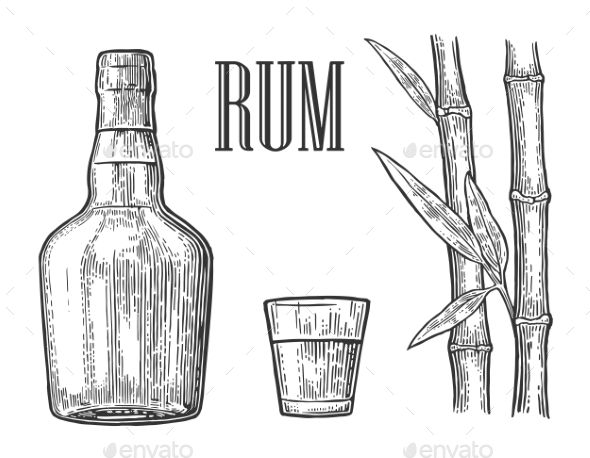 Glass and bottle of rum with sugar cane. Vintage vector