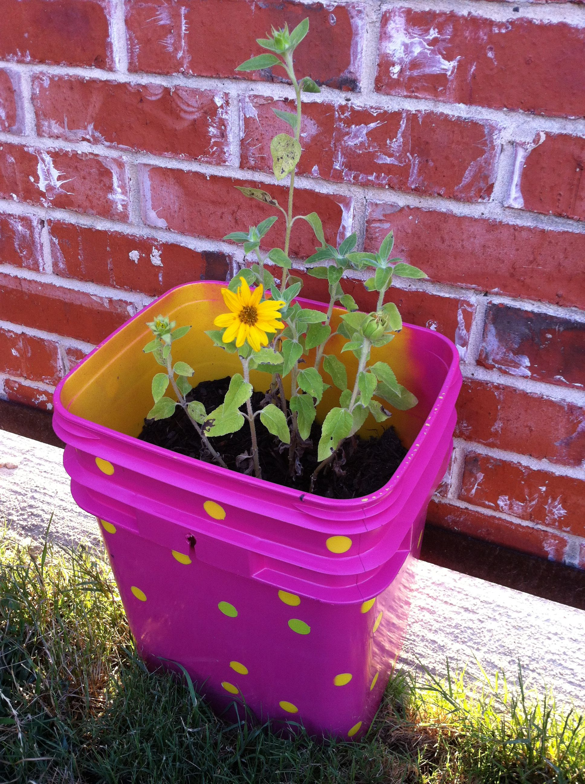 Repurpose: Flower Pot Made From Spray Painted Kitty Litter Bucket.