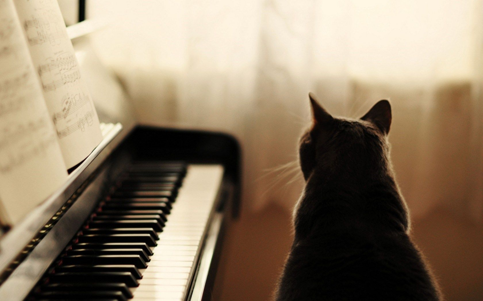 Cat Piano Music HD Wallpaper Desktop Backgrounds Free
