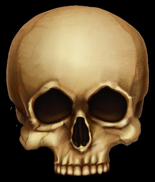 Gallery Recent Updates Skull Halloween Skull Png