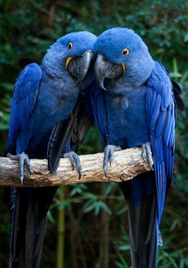zwei süße blaue Papageien … | Malen | Pinte…