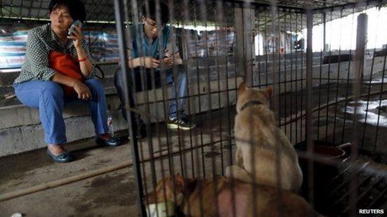 China Yulin Dog Meat Festival Under Way Despite Outrage #China, #dogMeatFestival