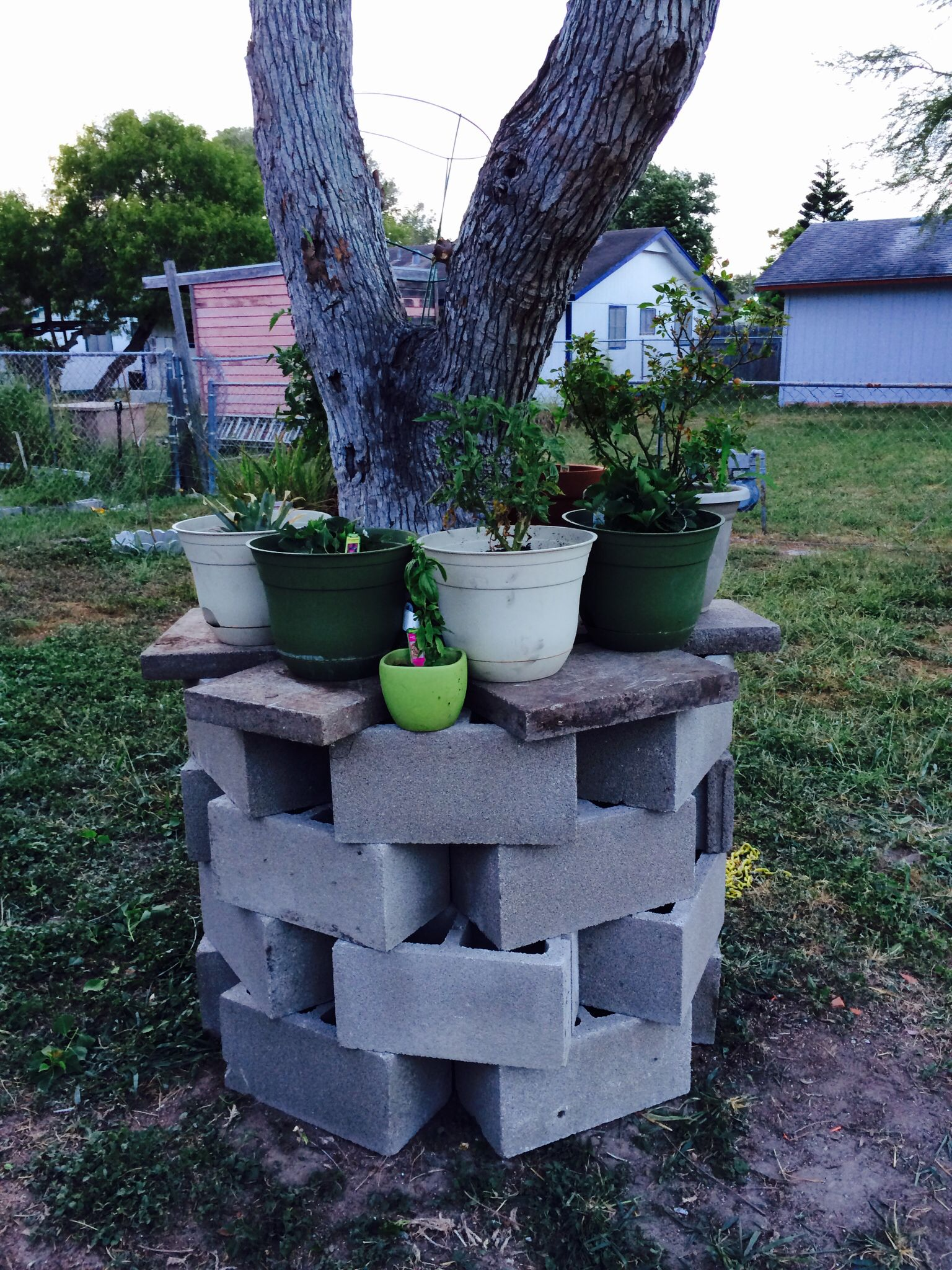 Our version and inspiration on a cinder block wall garden ... on Backyard Cinder Block Wall Ideas id=79075