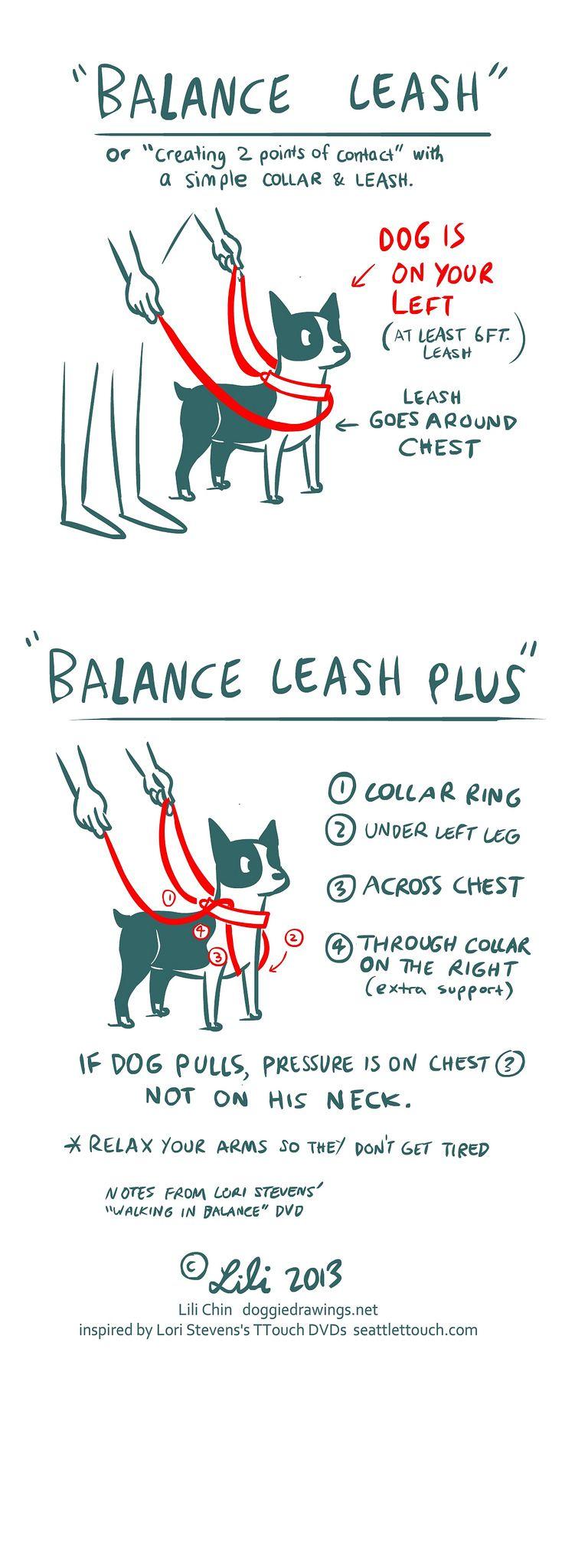 Boogie TTOUCH notes BALANCE LEASH Dog training, Dog