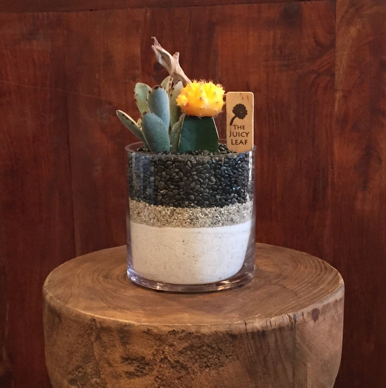 Succulent In A Cylinder Vase With White Sand Black Rock Terraria