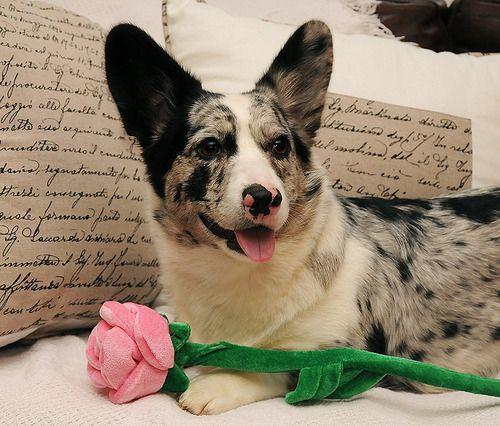 Pin On Animal And Pet Addiction