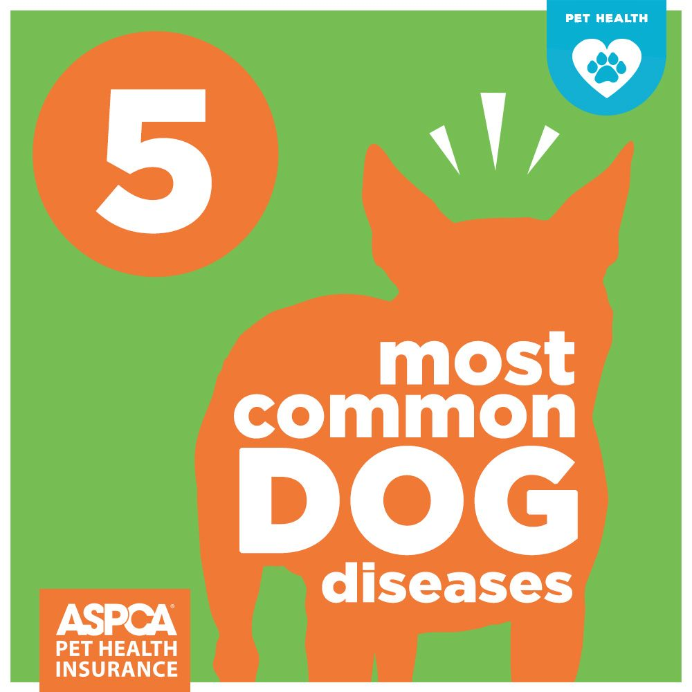 The 5 Most Common Dog Diseases | Dog sick signs, Dog ...