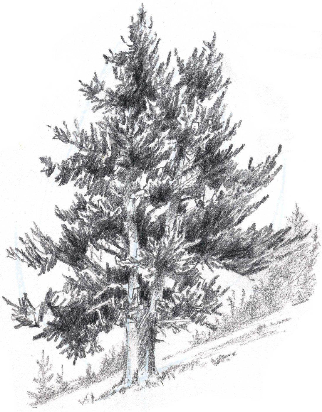 How to draw pines in pencil and paints A step-by-step guide for adults and children 8