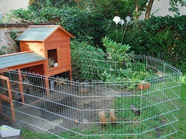 100 top idées de poulaillers pour la prise en charge de vos poulets