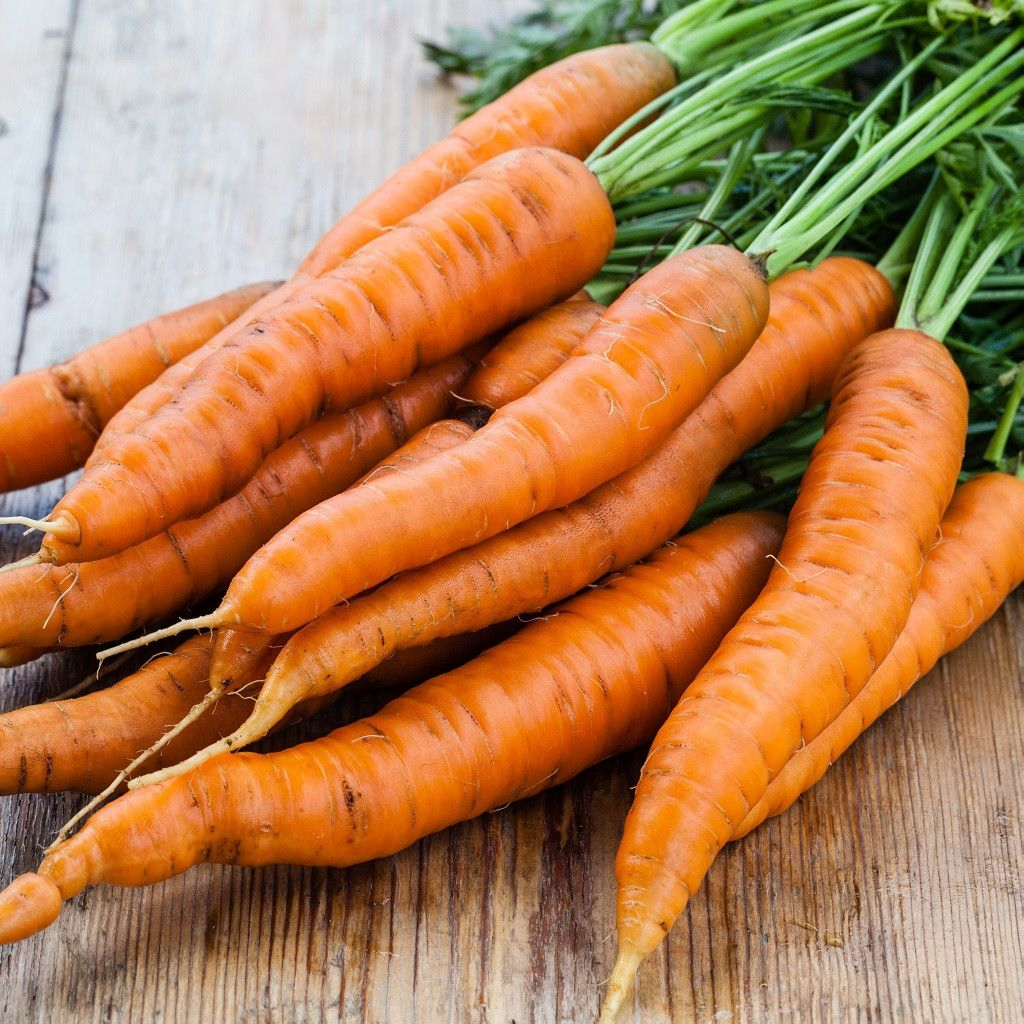 1/4 Pound of Danvers Carrot Seed Bulk Garden Seed in 2019