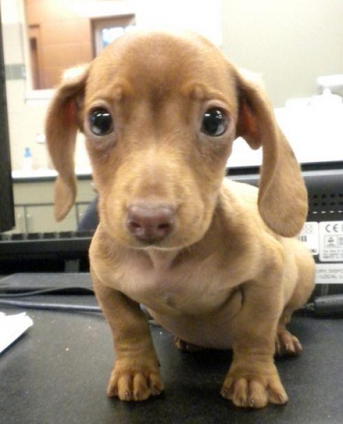New Set Of Cute Animals Cute Animals Cute Little Puppies