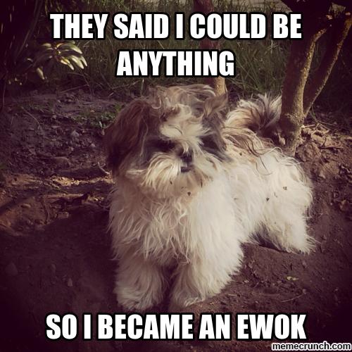 Shih Tzu Meme Google Search Shih Tzu Dog Shih Tzu Shih Tzu Puppy
