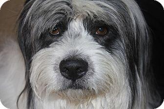 Salt Lake City Ut Tibetan Terrier Bearded Collie Mix Meet Alexander A Dog For Adoption Tibetan Terrier Terrier Pets